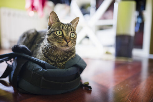 Tabby cat lying on a backpack - RAEF01514