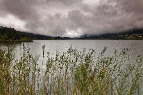 Austria, Carinthia, Techendorf, reed at Lake Weissensee - GFF00810