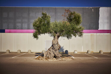 Italy, Apulia, Olive tree on parking place in Cavallino - DIKF00229