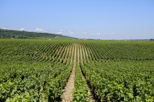 France, Burgundy, Domaine de la Romanee-Conti, Vineyard - HLF00996