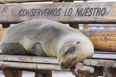 Ecuador, Galapagos Islands, San Cristobal, dozing Galapagos sea lion  lying on a bench - CB00396