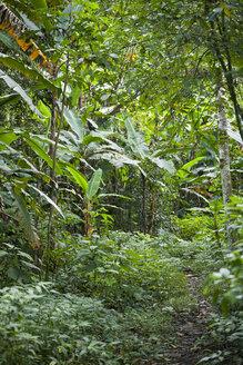 Thailand, Kamphaeng Phet, Mae Wong National Park, path through the jungle - ZCF00431