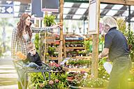 Gardener helping clients at garden centre - ZEF10966