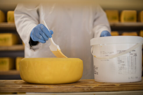 Cheese factory worker applying wax on cheese - ZEF11023