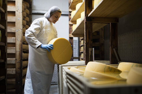 Cheese factory worker controlling maturation of cheese - ZEF11032