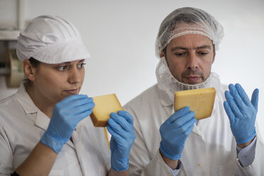 Cheese factory workers testing quality of cheese - ZEF11041