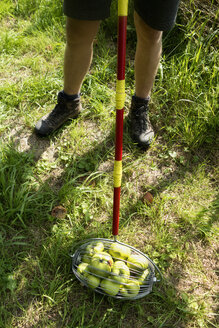 Germany, Pommritz, Man collecting windfall apples with harvesting roll - NDF00609