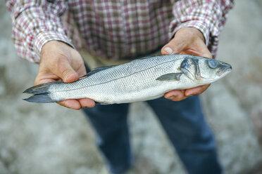 Senior man showing caught fish - DAPF00445