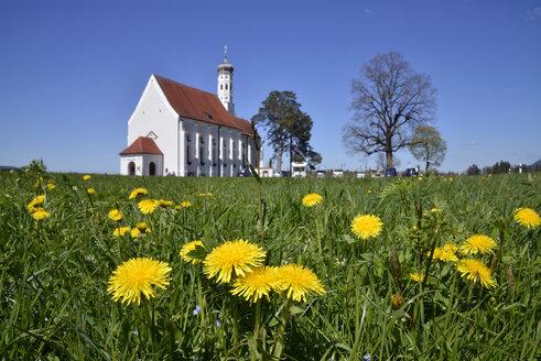 Germany, Bavaria, St. Coloman church in Schwangau near Fuessen behind dandelion meadow - GNF01372
