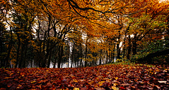 Autumnal forest - MPAF00080