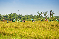 Indonesia, Java, farmers working in rice field - KNT00550