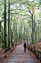 Poland, Misdroy, man walking in beech forest - NDF00615