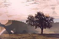Austria, Muhlviertel, Tree in autumnal landscape - FCF01116