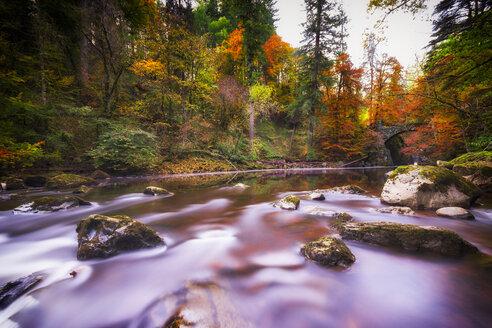 UK, Scotland, Dunkeld, Autumn trees at river Braan - SMAF00587