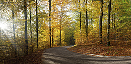 Road in autumn beech forest - ALF00715
