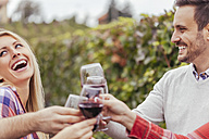 Happy friends in a vineyard clinking red wine glasses - ZEDF00421