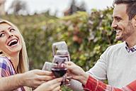 Happy friends in a vineyard clinking red wine glasses - ZEDF00421
