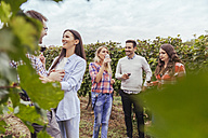 Friends socializing in a vineyard - ZEDF00430