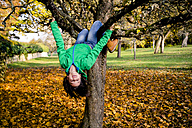 Girl climbing on tree in autumn - LVF05596