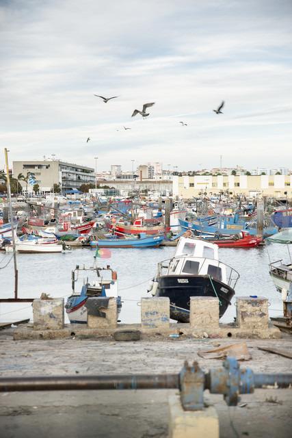 Portugal, Setubal, Fishing boats in harbor - CHPF00343