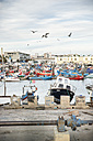 Portugal, Setubal, Fishing boats in harbor - CHPF00343