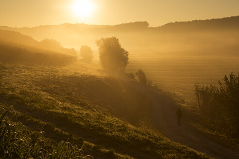 Italy, Tuscany, sunrise in rolling landscape near Lucca - FCF01121
