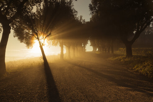 Italy, Tuscany, Val d'Orcia, tree-lined road in morning fog - FCF01143