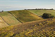 Italy, Tuscany, Val d'Orcia, rolling landscape with geometric field - FCF01149
