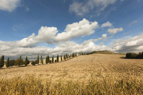 Italy, Tuscany, Val d'Orcia, rolling landscape - FCF01152