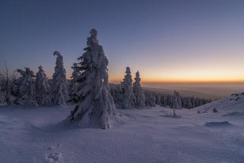 Germany, Lower Saxony, Harz National Park, Wolfswarte in winter at twilight - PVCF00936