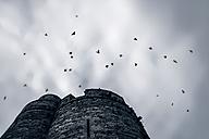 France, Lancieux, birds flying vover fort - FMKF03253