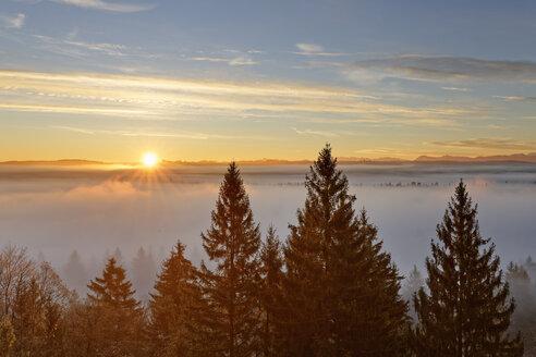 Germany, Icking, Isar Valley, sunrise over Pupplinger Au - SIEF07156