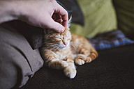 Hand of man stroking kitten - RAEF01584