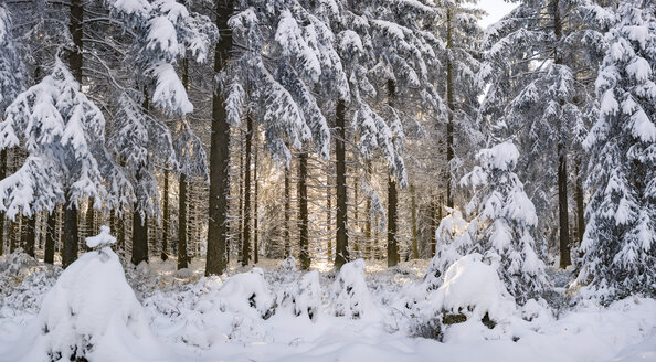 Germany, Thuringia, snow-covered winter forest at morning sunlight - VTF00563