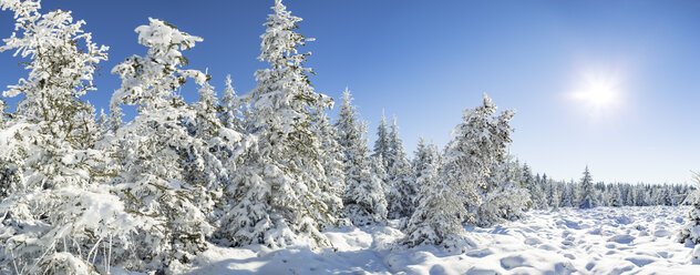 Germany, Thuringia, snow-covered winter forest at morning sunlight - VTF00566
