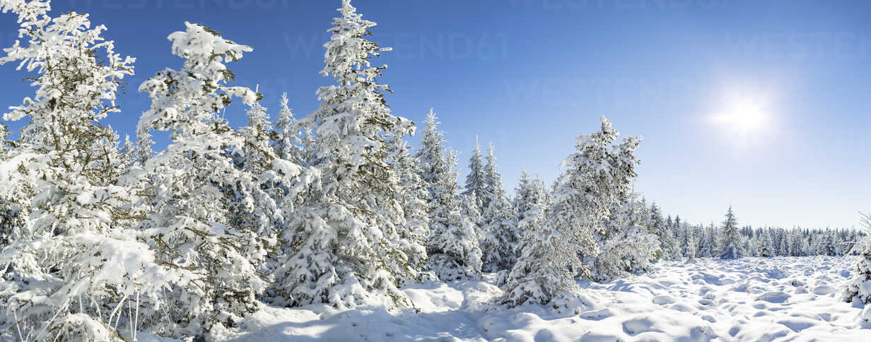 Germany, Thuringia, snow-covered winter forest at morning sunlight - VTF00566 - Val Thoermer/Westend61