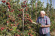Senior man examining fruits on an apple plantation - WIF03382