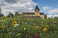 Germany, Baden-Wurttemberg, Reichenau Island, Flowers in meadow in front of St. George's church - KEBF00428