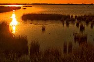 Spain, Tarragona, Ebro Delta, Encanyssada lagoon - DSGF01178
