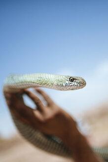 Morocco, woman's hand holding snake - KIJF01004