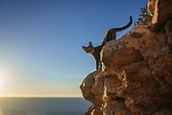 Cat walking down rocks at the sea - KIJF01021