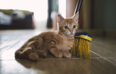 Ginger kitten leaning against broom - RAEF01590