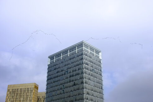 Luxembourg, crane formation flying over skyscrapers - HLF00999
