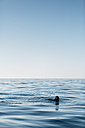 Man practicing free diving in the sea - JRFF01076