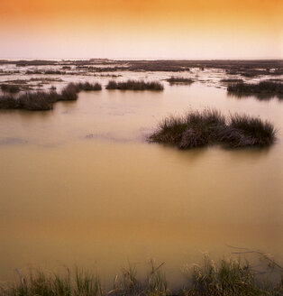 Spain, Villafafila lagoons, Lagoon Salina Grande - DSGF01187