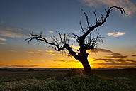 Spain, Province of Zamora, bare tree on field in Lagunas de Villafafila Reserve - DSGF01211