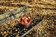 Basket with apples on bench in autumn forest - MJF02097