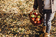 Boy carrying basket full of apples on forest path with autumn leaves - MJF02100
