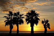 Spain, Benidorm, beach with palm trees at sunset - DSGF01237