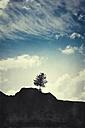 Italy, Lombardy, Lanzada, single tree on mountain - DWIF00812